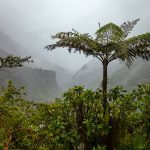 Palm tree and low clouds in the hills of Baños de Agua Santa
