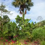 misahualli nature vegetation and palm trees and blue sky
